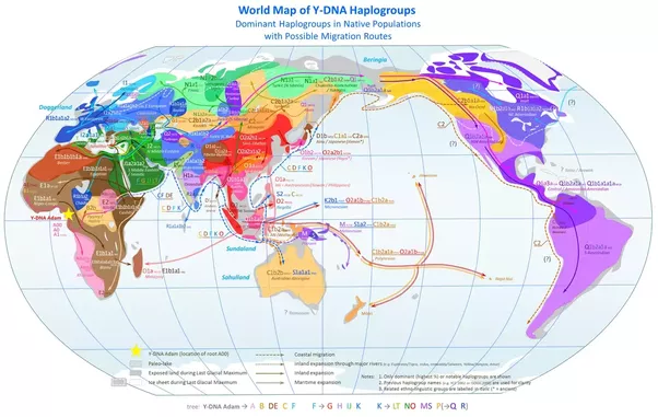 Why do people from new guinea look so different from other se asians this is complete y dna haplogroups map of world population note that y chromosome is inherited from father gumiabroncs Images