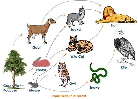 Network Of Related Food Chains