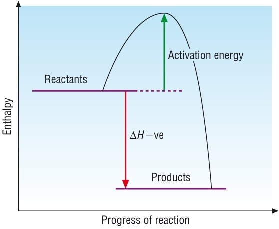 Because Respiration Requires Energy Is It Endothermic Quora
