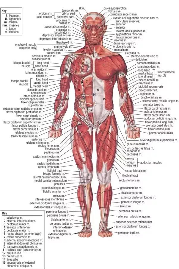 Are Bodybuilders Anti Science Quora