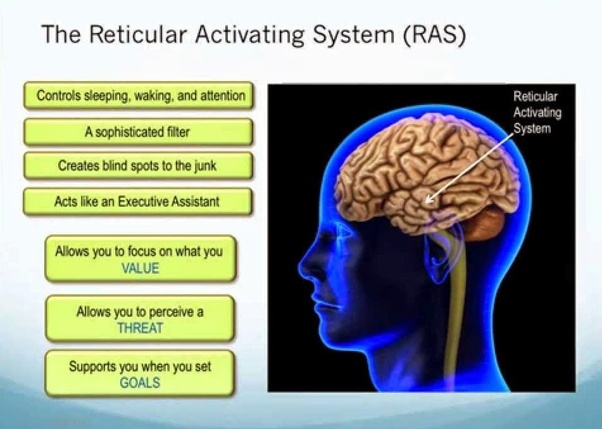 Is There Any Connection Between Law Of Attraction And Reticular