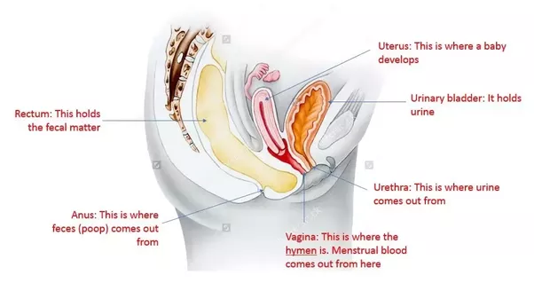 Can really hard stool cause hymenal tearing in a virgin? - Quora