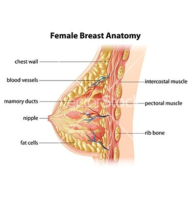 How To Make My Breasts Perkier Without The Need Of Plastic Surgery