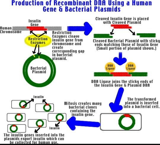 What Are The Application Of Restriction Enzyme In Biological And