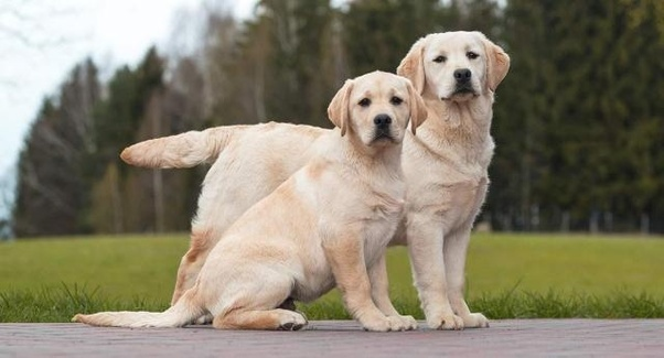What are some good female dog names? - Quora