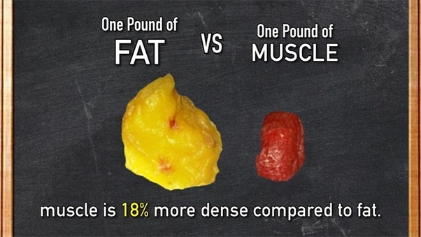 Why do people say muscle weighs more than fat? - Quora