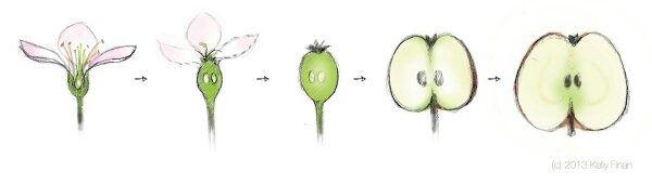 how to grow avocado inside the house