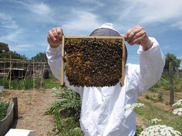 Is it simple to make your own beehive? - Quora