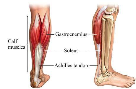 Can Calf Raises Lead To Shin Splints Quora