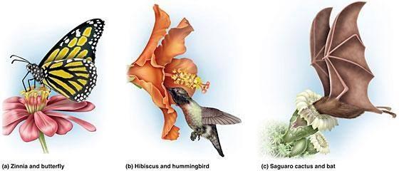 Hummingbirds Pollination Diagram Enthusiast Wiring Diagrams