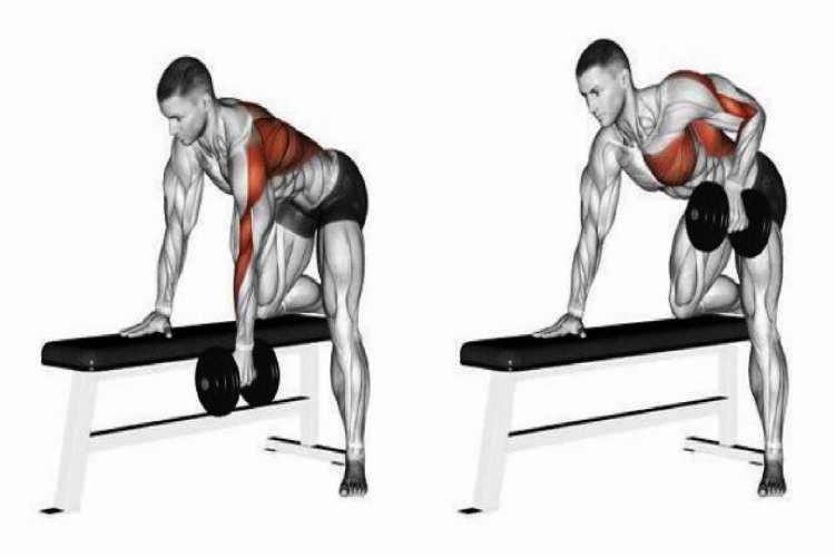 One-arm dumbbell row, back workout for a beginner