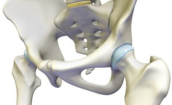 What is a hip joint? - Quora