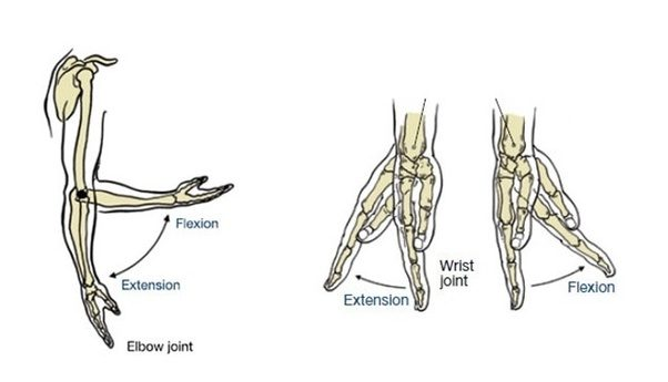 What Is The Meaning Of Flexion Extension Abduction And Adduction