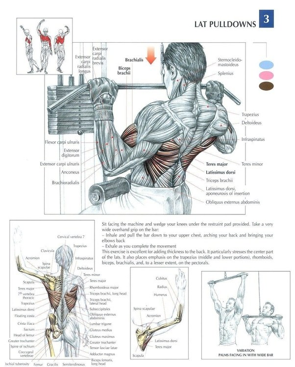Here S One Of My Latest Graphic Workouts To Demonstrate: What Are The Similar And Different Muscle Groups Involved