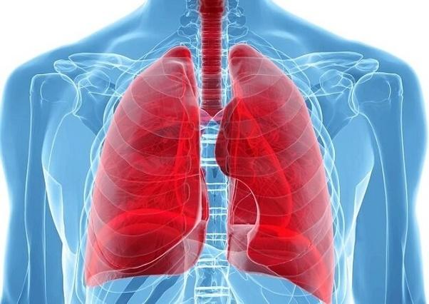 Cuál es la posición anatómica de los pulmones? - Quora