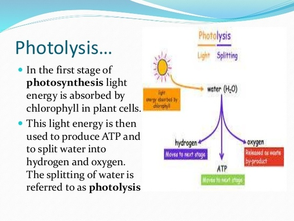 What Is The Source Of Oxygen Produced During Photosynthesis In