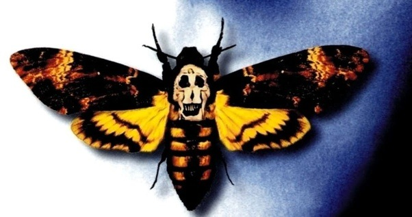 Image result for the movie the silence of the lambs