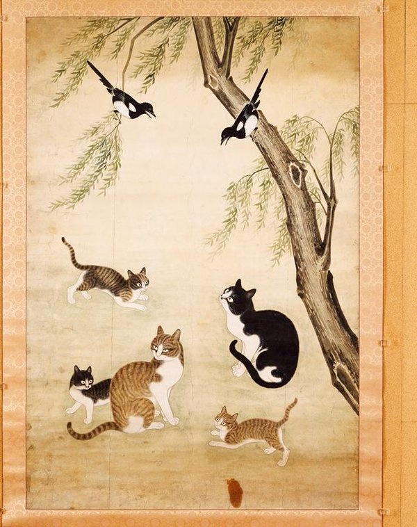 What Is The Breed Name Of Korean Domestic Cats Quora