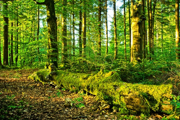 Seeing the forest for the trees: What one oak tells us about climate change
