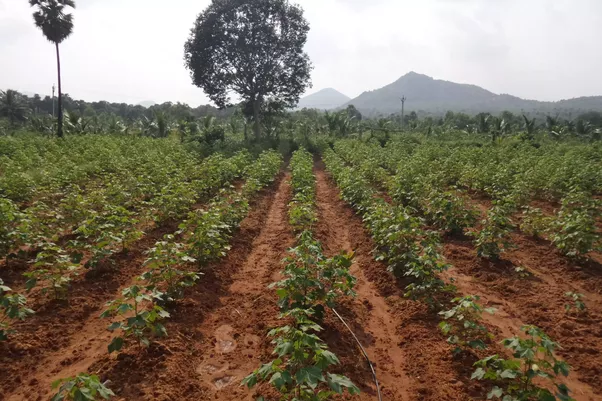 What is the scope of organic farming in india i 39 m an mba for Soil 1 year mba