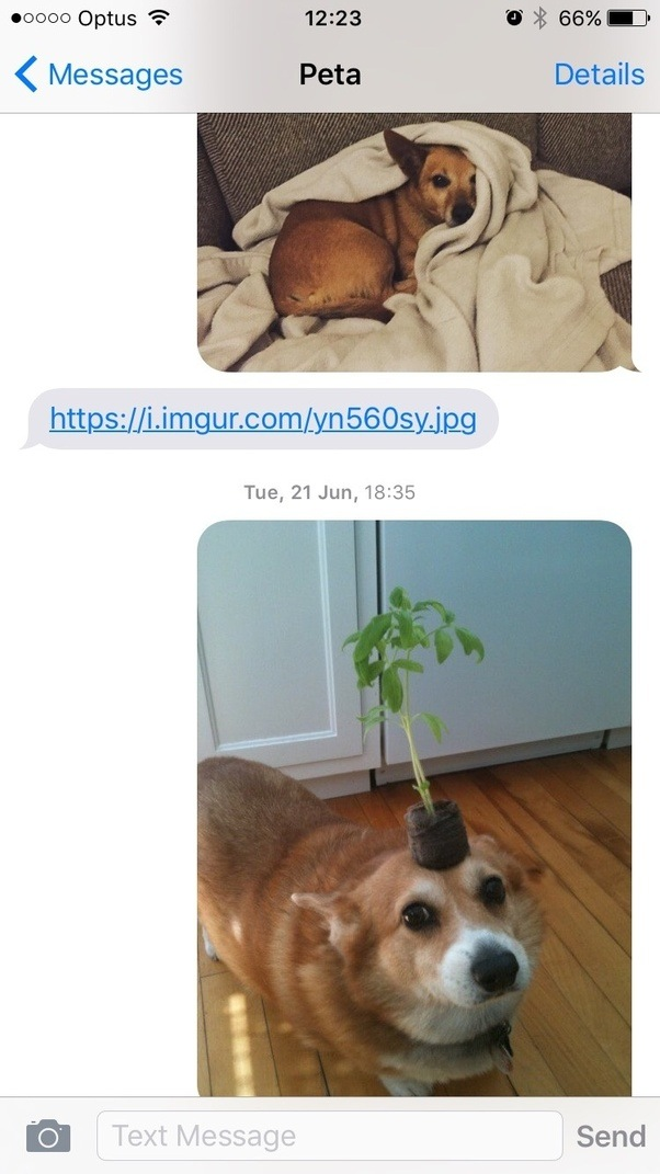 What do couples talk about once the mystery has faded and you pretty well thats easy and obvious photos of puppies with stuff on their heads i mean duh fandeluxe Image collections