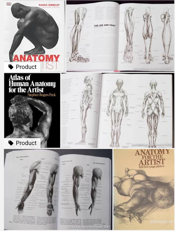 I\'m looking to study anatomy to help improve my figure drawing. What ...