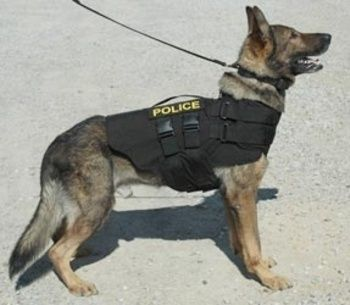 Why Don T Police Use Larger Guard Dogs Quora