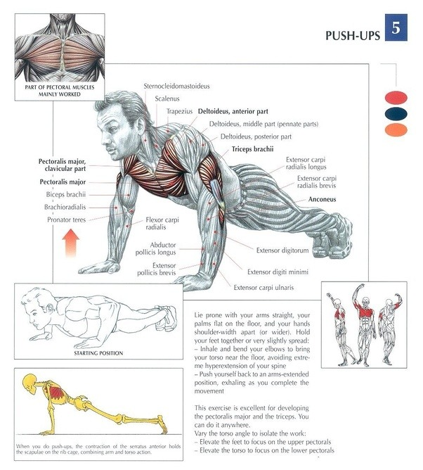 Damaging Your Shoulders Doing Bench Press Is All Too Easy The Push Up Position Stabilizes The Shoulder Girdle In A Way That Bench Press Does Not It Also