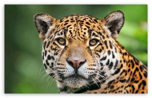 Leopard Cheetah Animal Print Wedding Invitation Throw Pillows