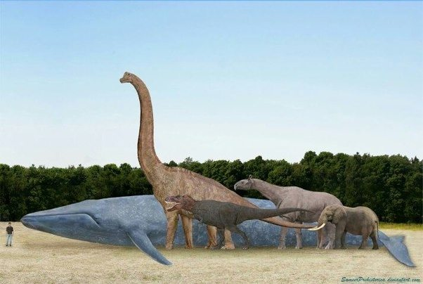 Has there ever been an animal that rivals the size of a ...
