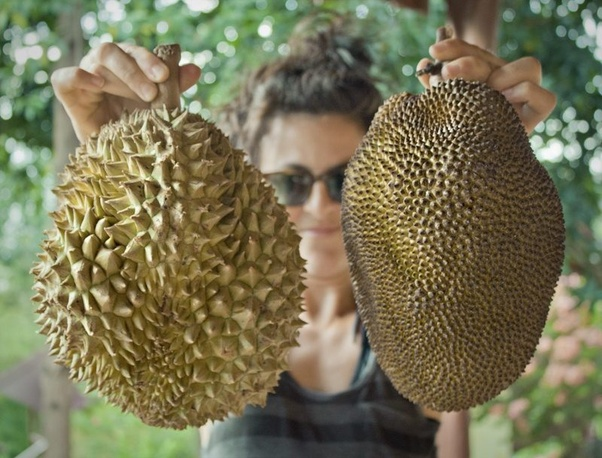 what is the difference between durian and jackfruit quora