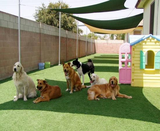 Where Can I Adopt Puppies In Delhi Quora