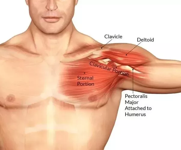 My left chest is more developed than my right chest. How can I fix ...