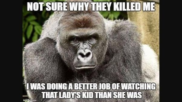who is the murderer of harambe quora