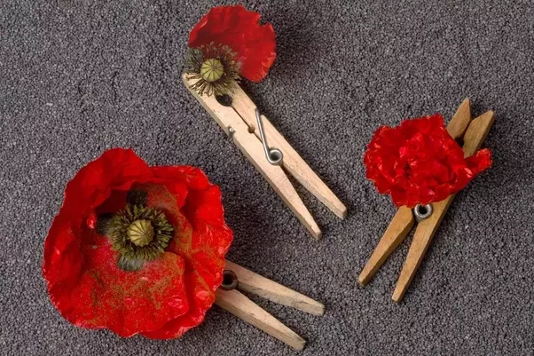 Tips for nurturing poppy seeds stover seeed quora poppies are an annual flower meaning that you will need to reseed each year to continue growing them however after they bloom into magnificent flowers mightylinksfo