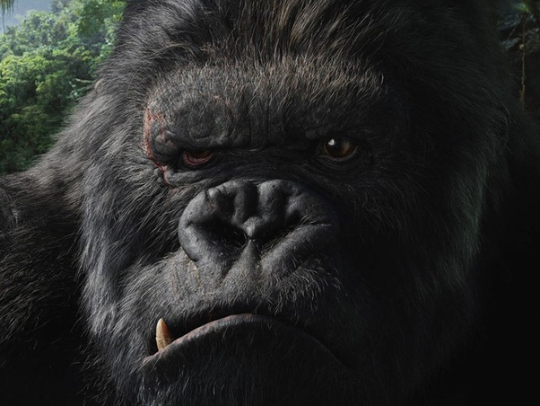 What Is The Difference Between King Kong 2005 And Kong Skull Island Quora