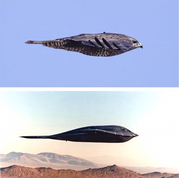 How Fast Can A Peregrine Falcon Fly Quora