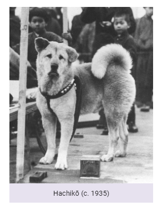 What Dog Breed Is Hachiko In The Movie Hachi A Dog S Tale