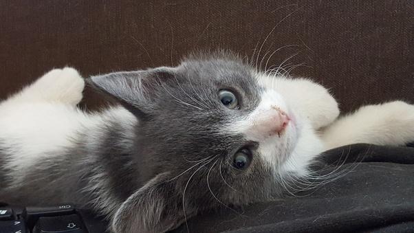 「cat bite the neck」の画像検索結果
