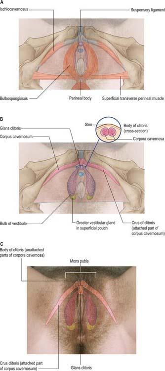 Virgin women sex organ