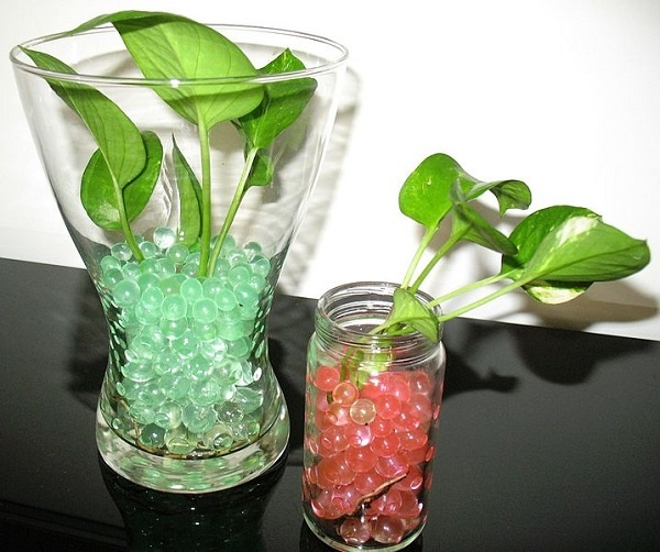 Indoor Plants Grown In Water: How To Care For A Money Plant Growing Indoors In Water