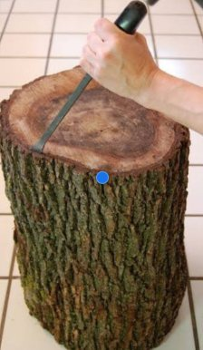 How To Remove Bark From A Tree Stump Quora