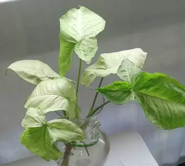 Which Plants Are Best In Absorbing Carbon Dioxide And Can