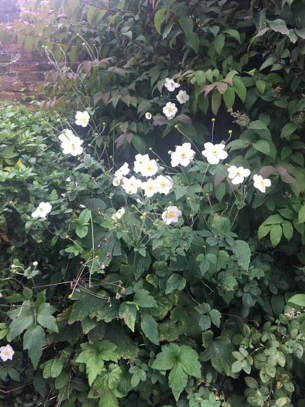 What are these white flowers called quora mightylinksfo