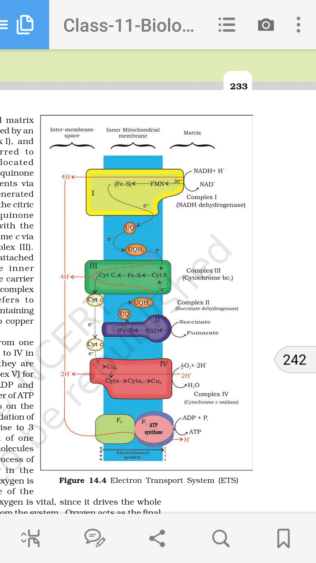 What's new in the latest NCERT 12th class biology book in