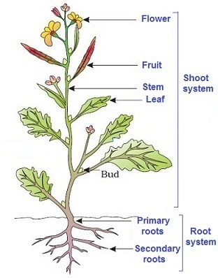 How To Memorize The Examples Of Plant Morphology For Aipmt Quora