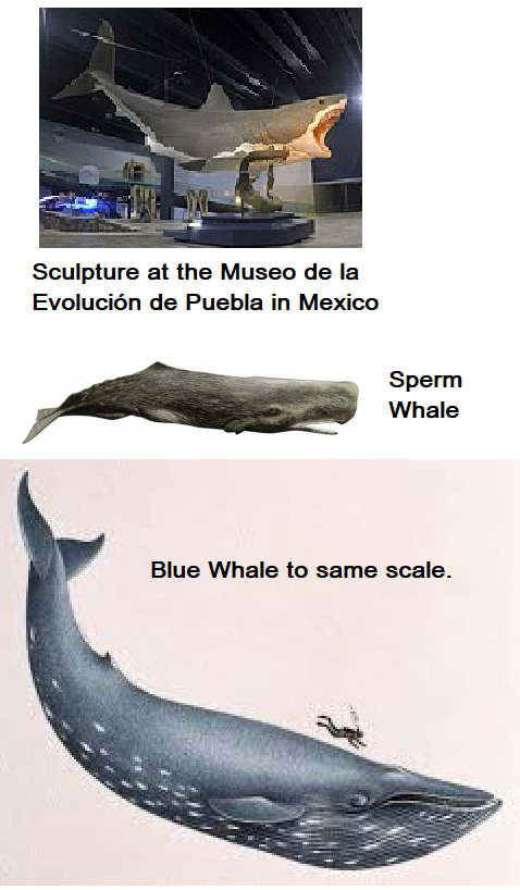 How bigger is a megalodon compared to a blue whale? - Quora