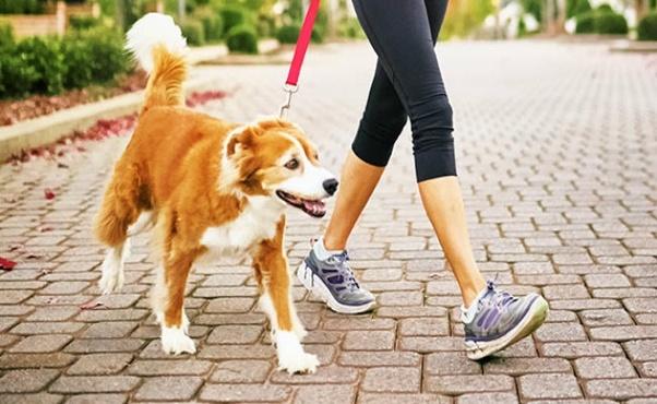 dog walker cost