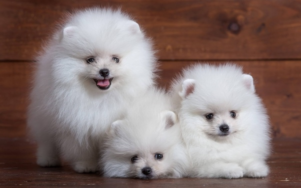 Breed Of Dog For Small Houses