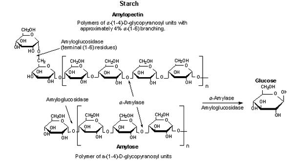 Pulbere de enzimă celulozică u / g CAS – autordefrumos.ro